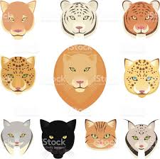 jaguar icon felines leopard panther lion tiger cougar jaguar heads collection