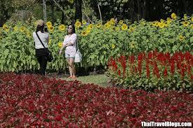 rama ix park flower festival from 1 10 december 2017 u2013 thai travel