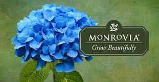 plant catalog monrovia