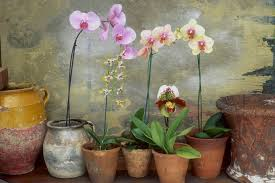 orchids care how to care for your orchids
