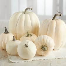 white pumpkins assorted harvest white pumpkins fall and primitive decor