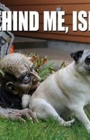 Meme Dog - 45 funny dog memes dogtime