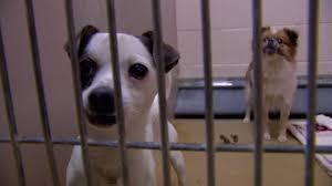 pet adoption abc7ny com