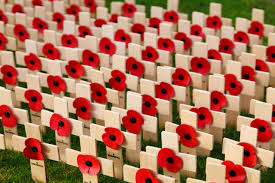 remembrance day free stock photo public domain pictures