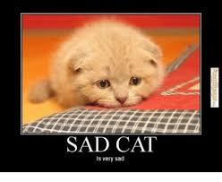 Sad Cat Memes - sad cat is very sad meme on me me