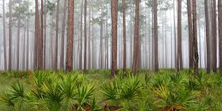 Florida Forest images Florida panhandle basic facts about the florida panhandle jpg