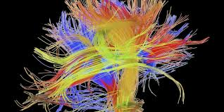 Human Brain Mapping Brain Cartography Modern Day Explorers Are Mapping The Wiring Of