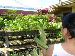 container vegetable gardening apartment pavillion home designs