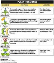 basic bonsai botany botany bonsai and plants