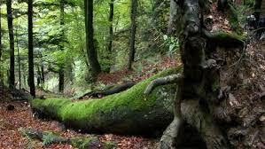 si e unesco sasso fratino e il parco delle foreste casentinesi sono patrimonio