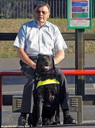 Dogs Helping Blind People Muslim Bus Drivers Refuse To Let Guide Dogs On Board Daily Mail