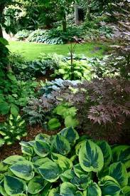 blue and green hostas in the shade of trees garden pinterest