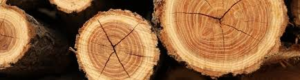 wood tree rings images Teaching about tree rings jpg
