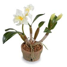 faux orchids wildon home faux cattleya orchid flower in pot reviews wayfair