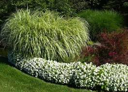trim ornamental grass yard clean up 9 tricks for easier fall