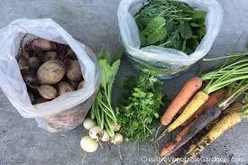 creative vegetable gardener plant a fall garden and harvest