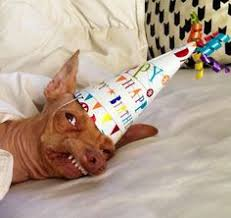 Birthday Dog Meme - tuna birthday dog blank template imgflip