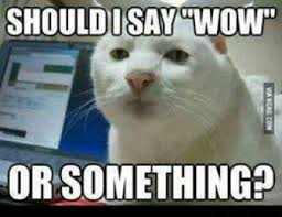 Hi5 Meme - should i say wow or something funny cat commentphotos com