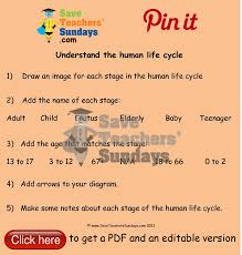 human life cycle instructions and worksheet go to http www