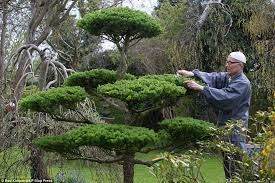 japanese garden pictures former monk in north clifton spends 35 years turning wasteland
