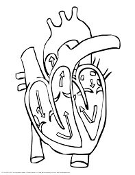 sensational design human heart coloring pages human heart
