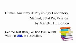 Pearson Anatomy And Physiology Lab Manual Human Anatomy And Physiology Marieb 10th Edition Test Bank At Best