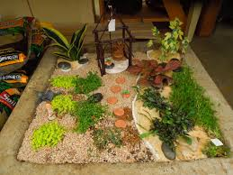 images about terrarium mini cactus gardens on pinterest the