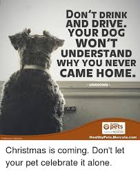 Drink Driving Memes - istock com idebibishop don t drink and drive your dog won t