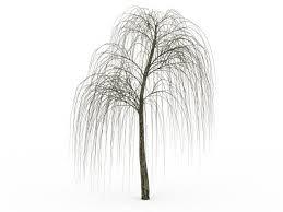 bare willow tree 3d model wishing tree willow tree