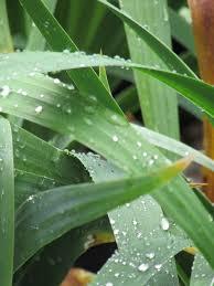 Quote Garden Family Garden Quote U2013 John Updike Rain Is Grace U2026 Ravenscourt Gardens