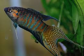 lethal testing for viruses in ornamental fish postponed after