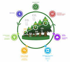 how does pαc work planet alpha corp forest carbon legacy