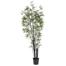 6 foot black bamboo tree potted 5164