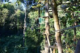 sydney the hills treetops sydney trees adventure glen harrow park