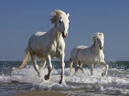 white mustang horse wild white horses many roads