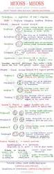 mitosis and meiosis mcat cheat sheet study guide learn what