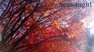 what day is thanksgiving fall on november 2016 seasonsgirl