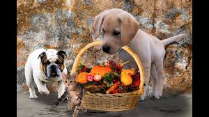7 foods to keep away from your pet on thanksgiving