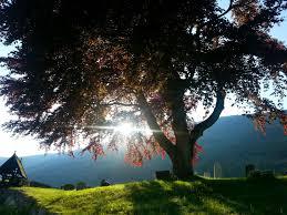 free images tree nature sky sunshine sun sunset sunlight
