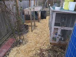 new rabbit house quail and parakeets out of eden