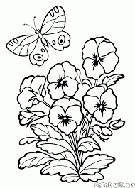 the garden flower pansy hybrid plant coloring pages kids aim