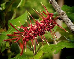 native plants nz new zealand native plants google search nz flowers pinterest