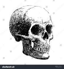 Halloween Skull Drawings Hand Drawing Skull By Pencil Use Stock Vector 215480614 Shutterstock