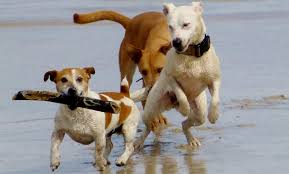 we love our pets on fort myers beach sun palace vacation homes