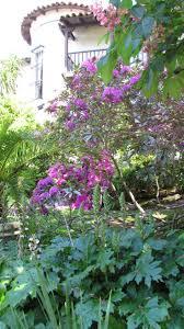 native san francisco plants 313 best san francisco bay area gardening images on pinterest