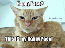 Wednesday Meme - wednesday memes starring hissy fit jones rumpydog