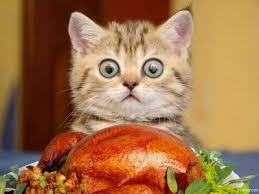 Thanksgiving Cat Meme - cat