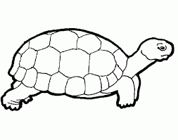 coloring fascinating turtle colouring coloring