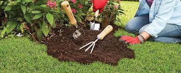Types Of Hoes For Gardening - desert gardens nursery