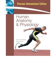 Human Anatomy Textbook Pdf Pearson Internal Edition Human Physiology And Anatomy Book Elaine